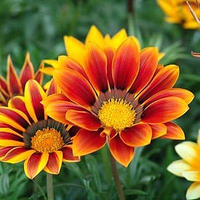 Les fleurs just another site for Site de fleurs